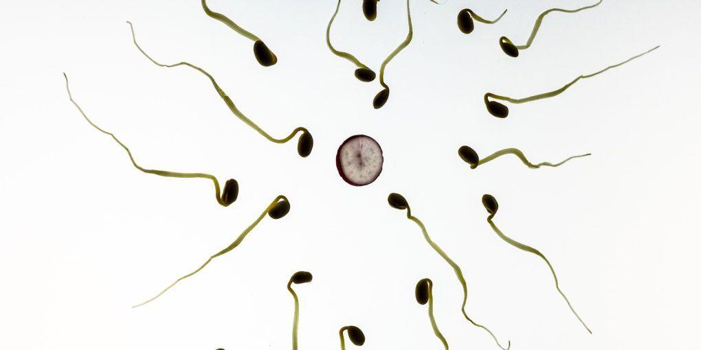 Sperma Kuriositäten