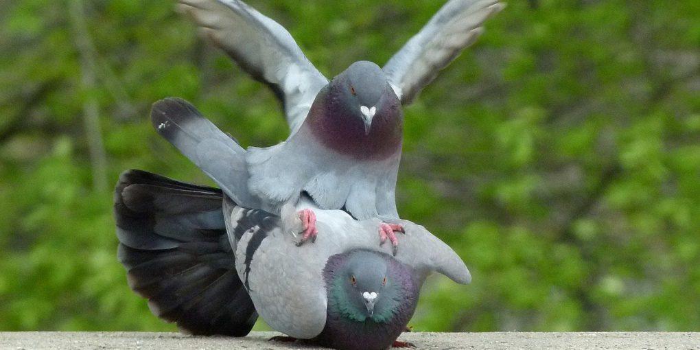 Untervögelt